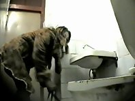 Wc147# Voyeur video from toilet